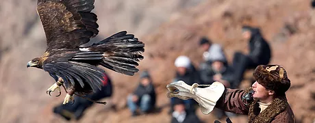 Hunting with Eagle